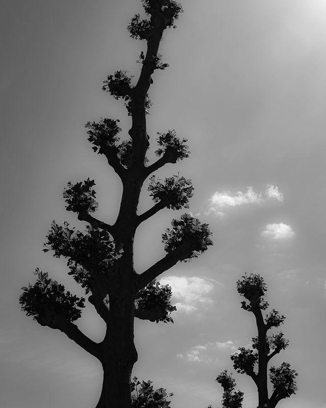 High contrast tree